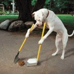Slimme hond